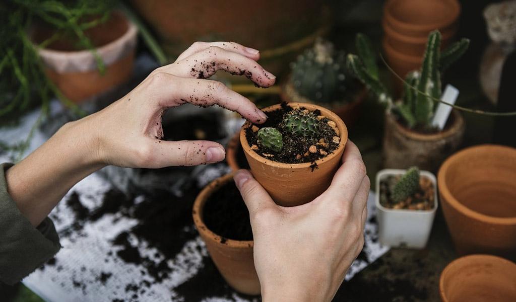 Cuidando de nuestras plantas en vacaciones