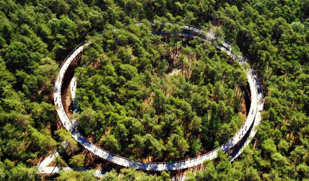 Ciclismo a través de los árboles / Burolandschap