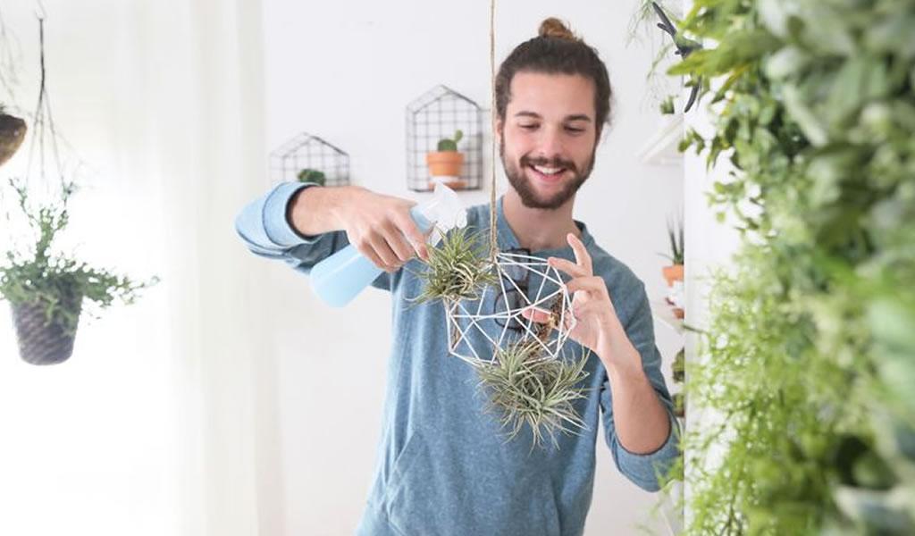 Las plantas en departamentos son la tendencia