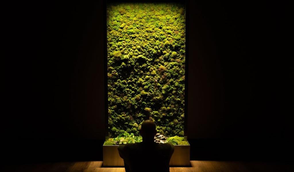 Por qué incorporar paredes de musgo en la arquitectura