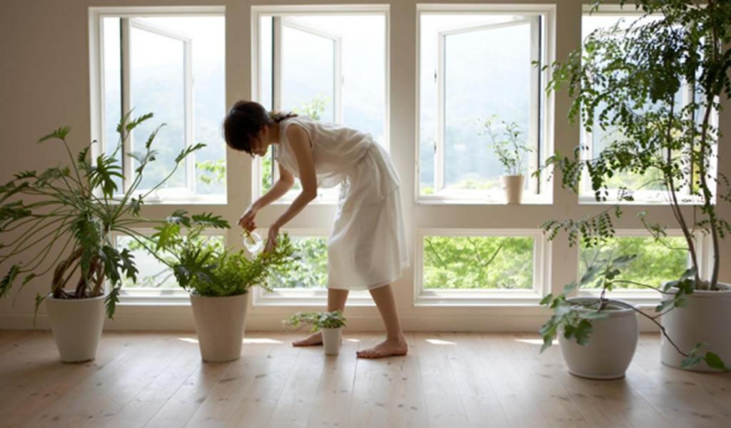 Macetas y plantas interiores