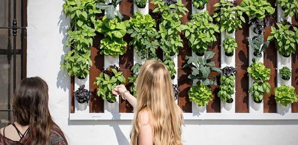 Consejos a la hora de instalar un jardín vertical en casa