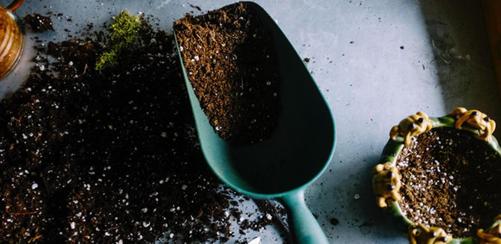 Los errores de jardinería que estás cometiendo y no sabías