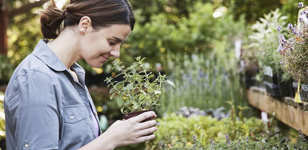 Todo lo que tienes que saber para el cuidado de tus plantas
