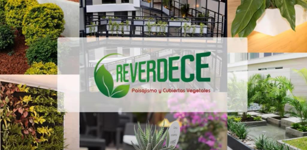 Reverdece