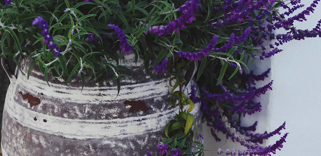 Elegimos las flores moradas ideales para decorar