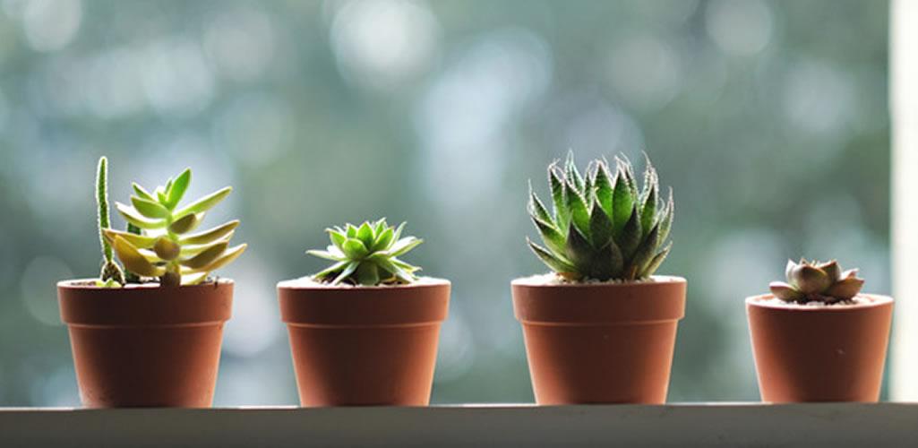 Estas son las plantas de interior que puedes tener en casa aunque seas alérgico