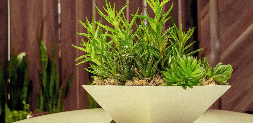 Razones para comprar fake plants