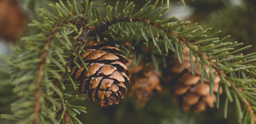 Cómo decorar tu árbol de Navidad con elementos naturales
