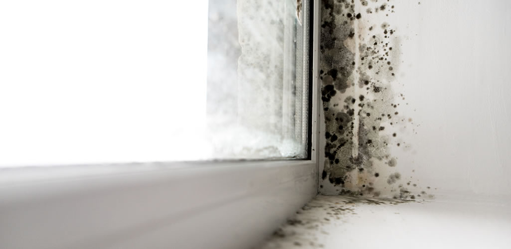 La amenaza del moho negro en la arquitectura y sus habitantes