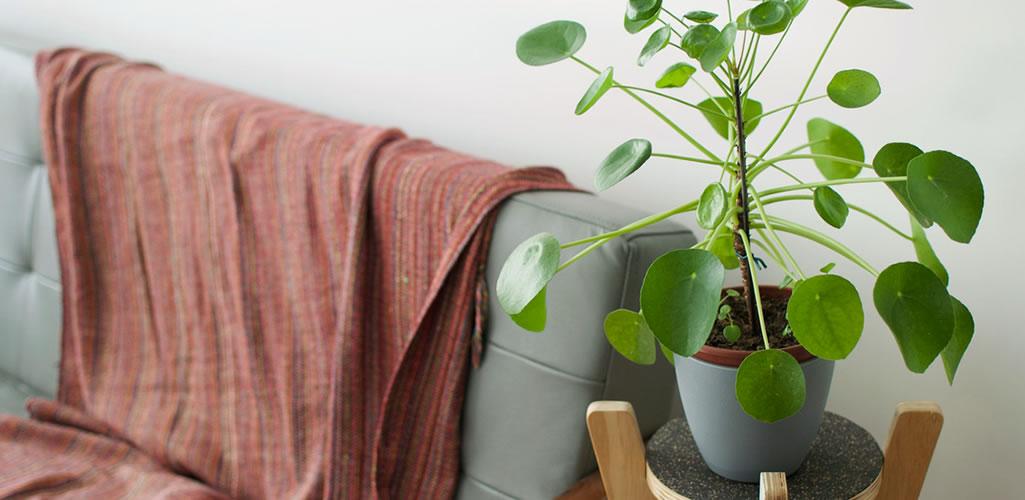 Plantas para atraer la prosperidad y la abundancia en 2021