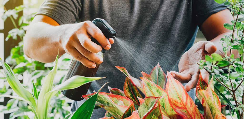 El fertilizante natural y casero que tus plantas amarán