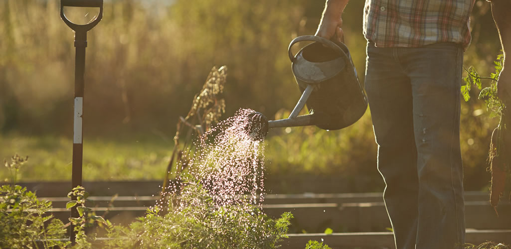 7 tips para cuidar tus plantas en época de calor