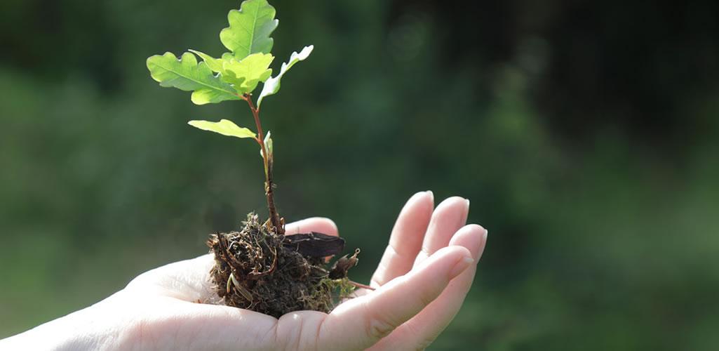 Tips para trasplantar tus plantas correctamente y no fracasar en el intento