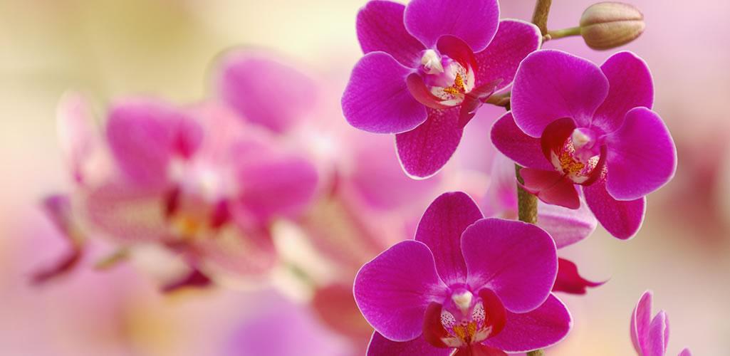 Orquídeas: todo lo que debes saber sobre ellas y cómo cuidarlas