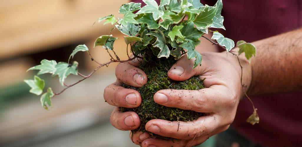 Kokedama, la tradición japonesa de jardinería que debes intentar