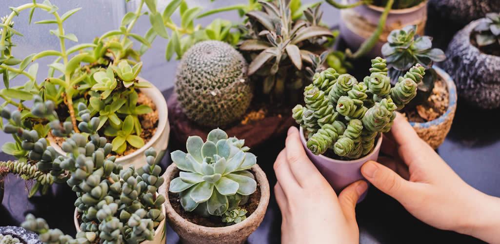 9 plantas para absorber la energía negativa en casa