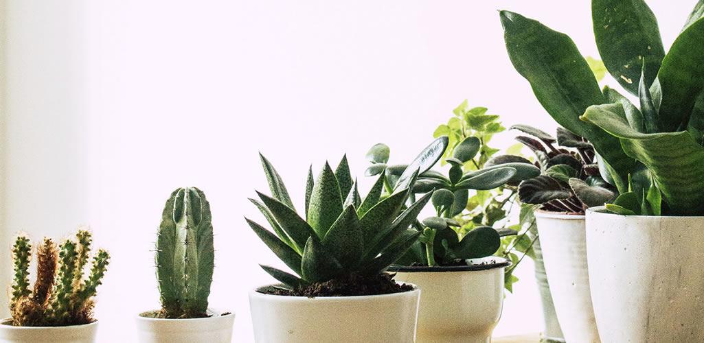 8 errores que cometemos al comprar plantas (y cómo solucionarlos)
