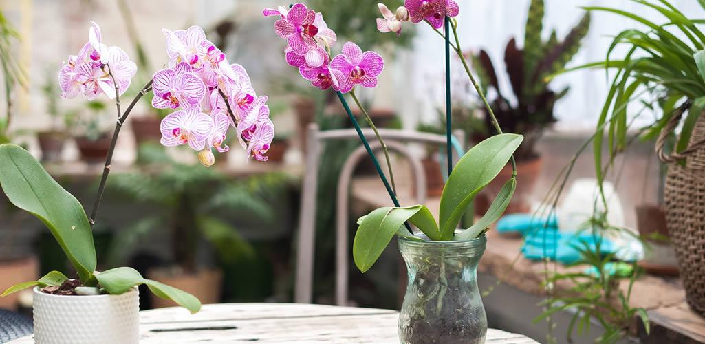 ¿Cómo cuidar las Orquídeas? 6 tips para conservarlas increíbles