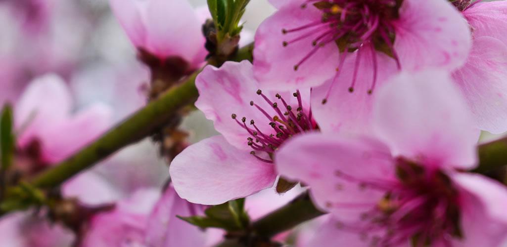 Las flores rosas más bonitas para decorar tu hogar
