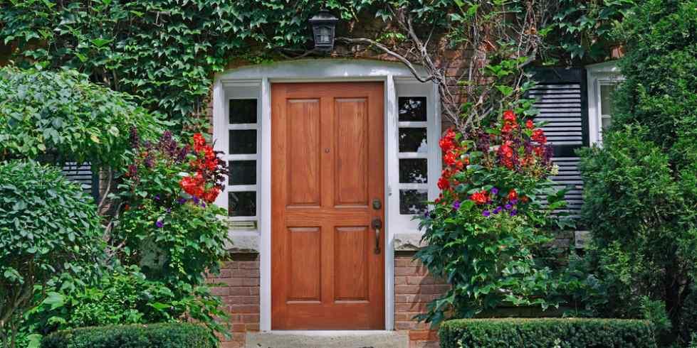 10 plantas trepadoras para tener privacidad en casa