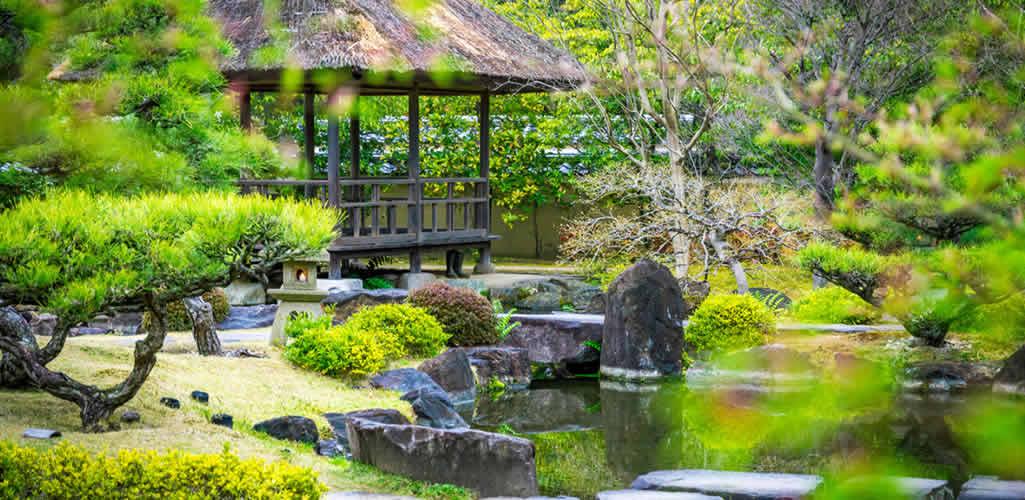 10 plantas japonesas para crear un jardín zen
