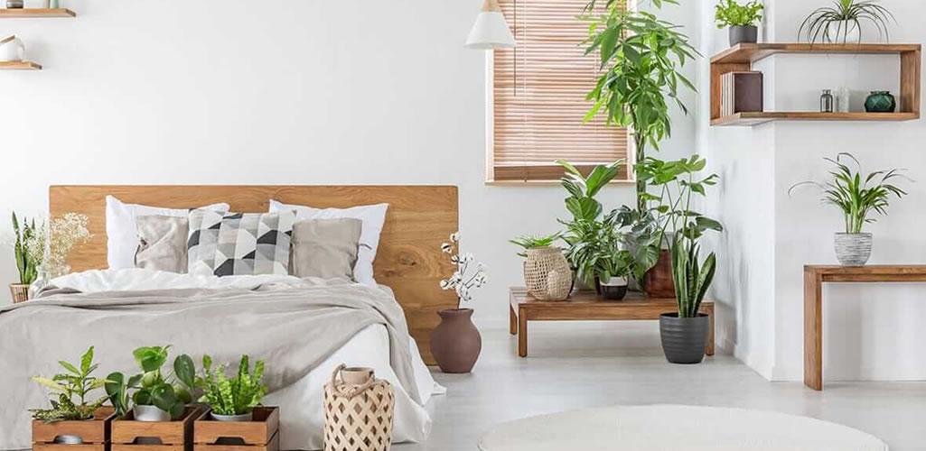 Plantas de interior resistentes y fáciles de mantener