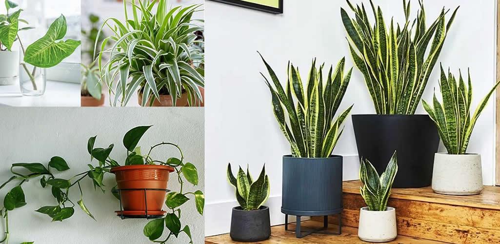 Reverdece: Plantas de fácil mantenimiento