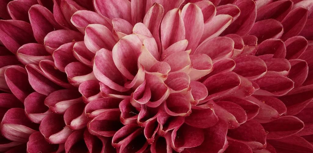 8 plantas que absorben y eliminan los malos olores dentro de tu hogar
