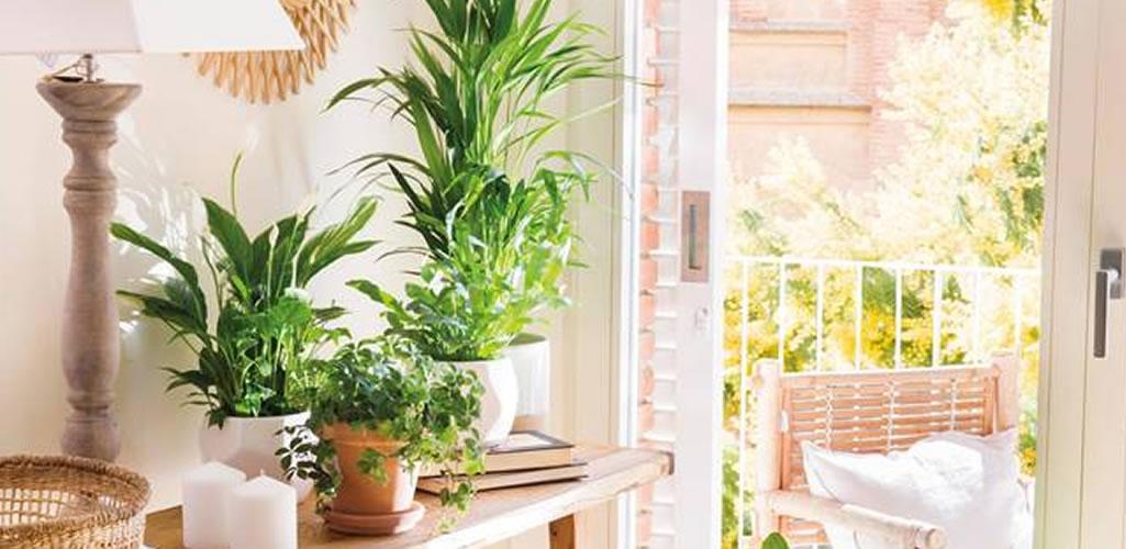 Por qué deberías usar jabón potásico para cuidar tus plantas